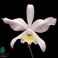 Vaso-per-orchidea_O1
